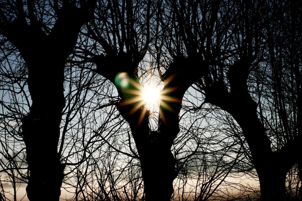 Wintermorgen_Pattensen_Reden_3