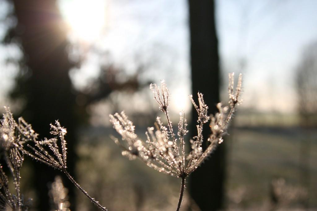 Wintermorgen_Pattensen_Reden_5